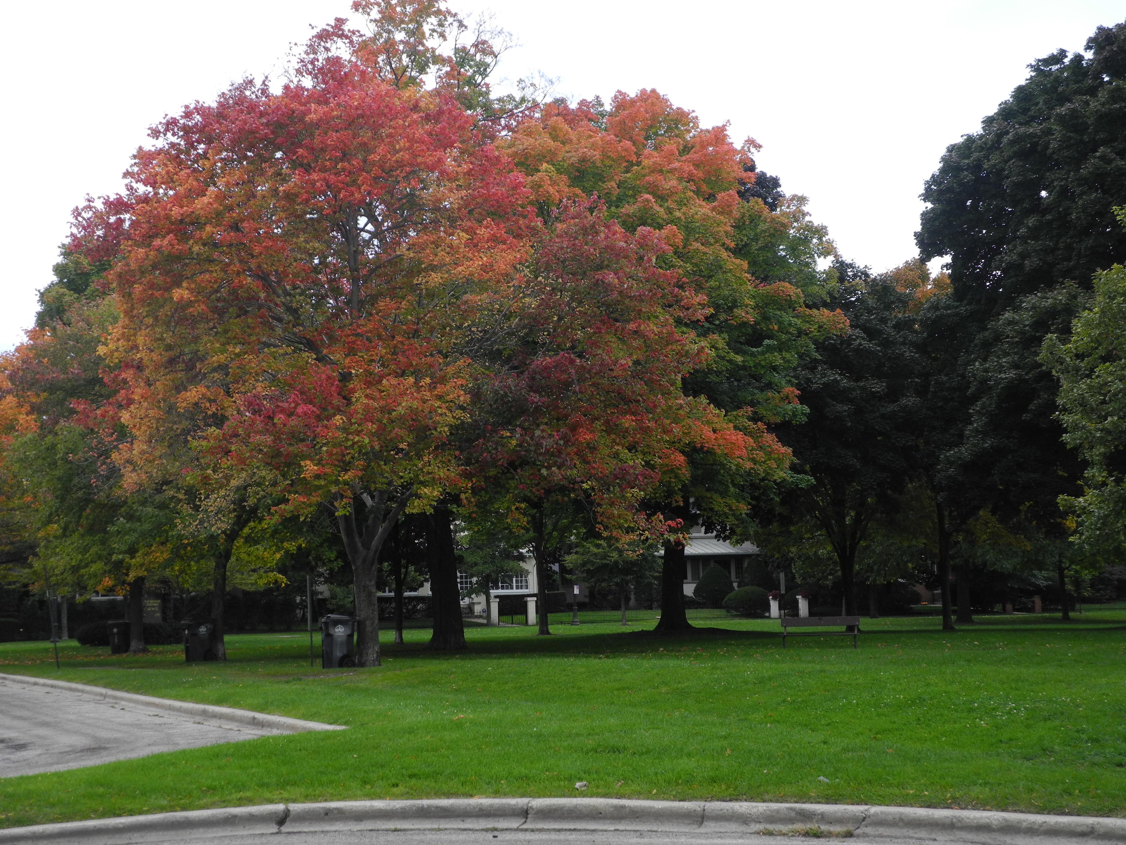 park ecole de chicago