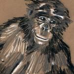 Chimpanze - Pierre noire, mine de plomb, craie - (c) 2010 - D. Deleglise